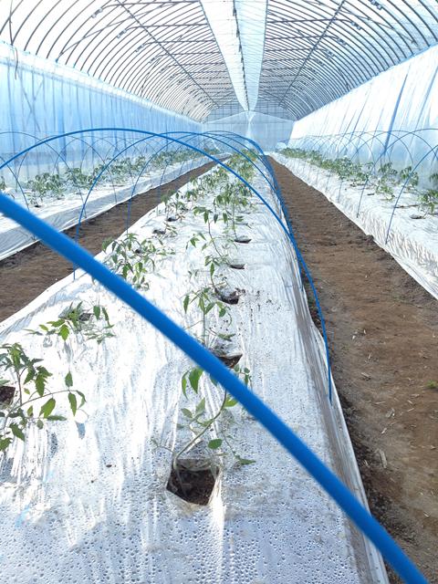 作物の成長に合わせて硝酸態窒素を投入します