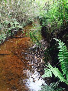 田んぼ暗渠排水1