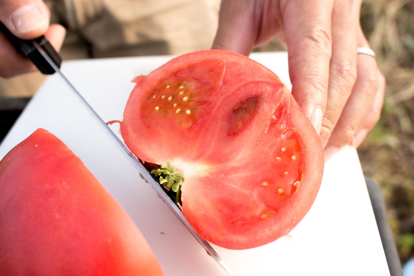 トマトの美味しい実がぎっしり!