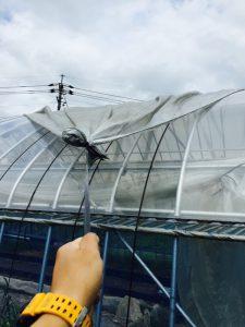 ファームスプリングボードハウス遮光ネット3