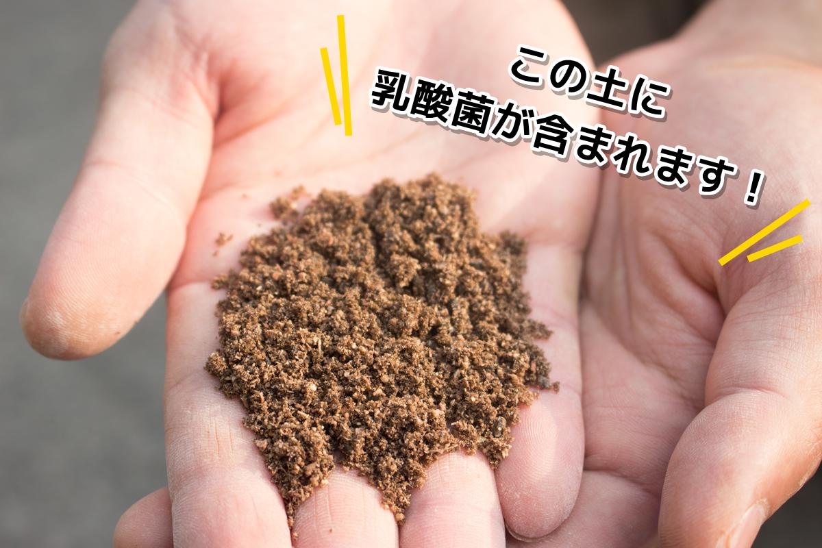 この土にトマトの味を濃くする乳酸菌が含まれます