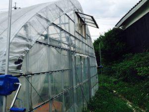 トマトのハウス組み立て2