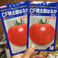 桃太郎はるかトマト種