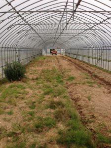 ファームスプリングボード圃場風景開業時2