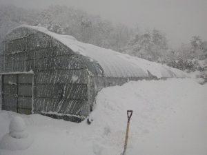 鳥取大雪ハウス