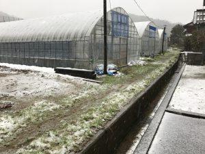 ファームスプリングボードハウス雪2