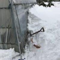 大雪ハウス除雪1