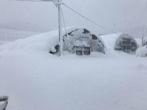 鳥取大雪ハウス3