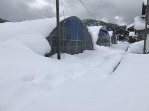 鳥取大雪ハウス4