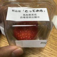 鳥取新品種イチゴとっておき
