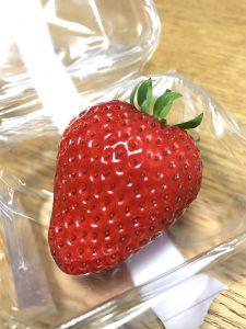 鳥取新品種イチゴとっておき2