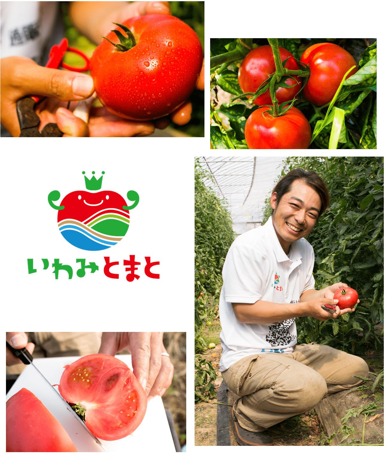トマトを通販でお届けしているファームスプリングボード